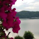 widok na jezioro, różowe kwiaty i zaporę