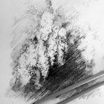 rysunek ołówkiem drzew